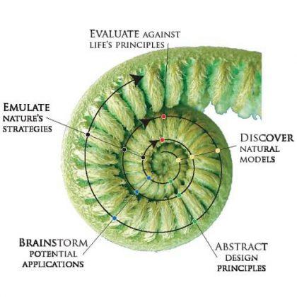 Generative Algorithm for Architectural Design Based on Biomimicry Principles