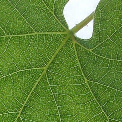 Performative Building Envelope Systems Using Leaf Venation Patterns