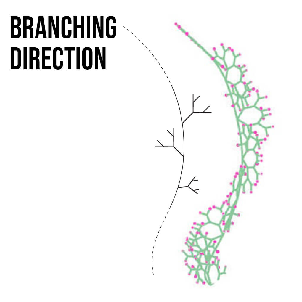 Branching Spiral