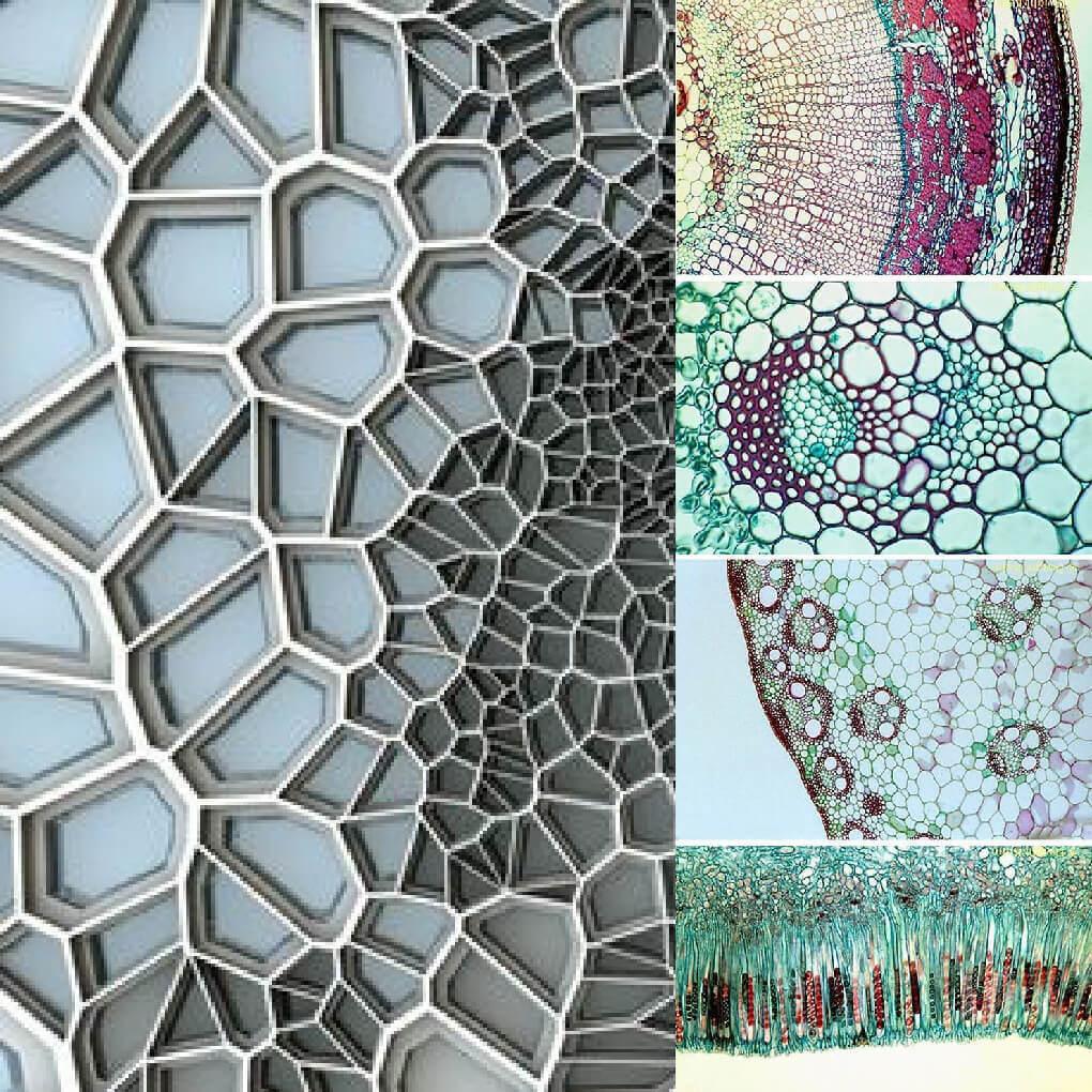 Voronoi Architecture