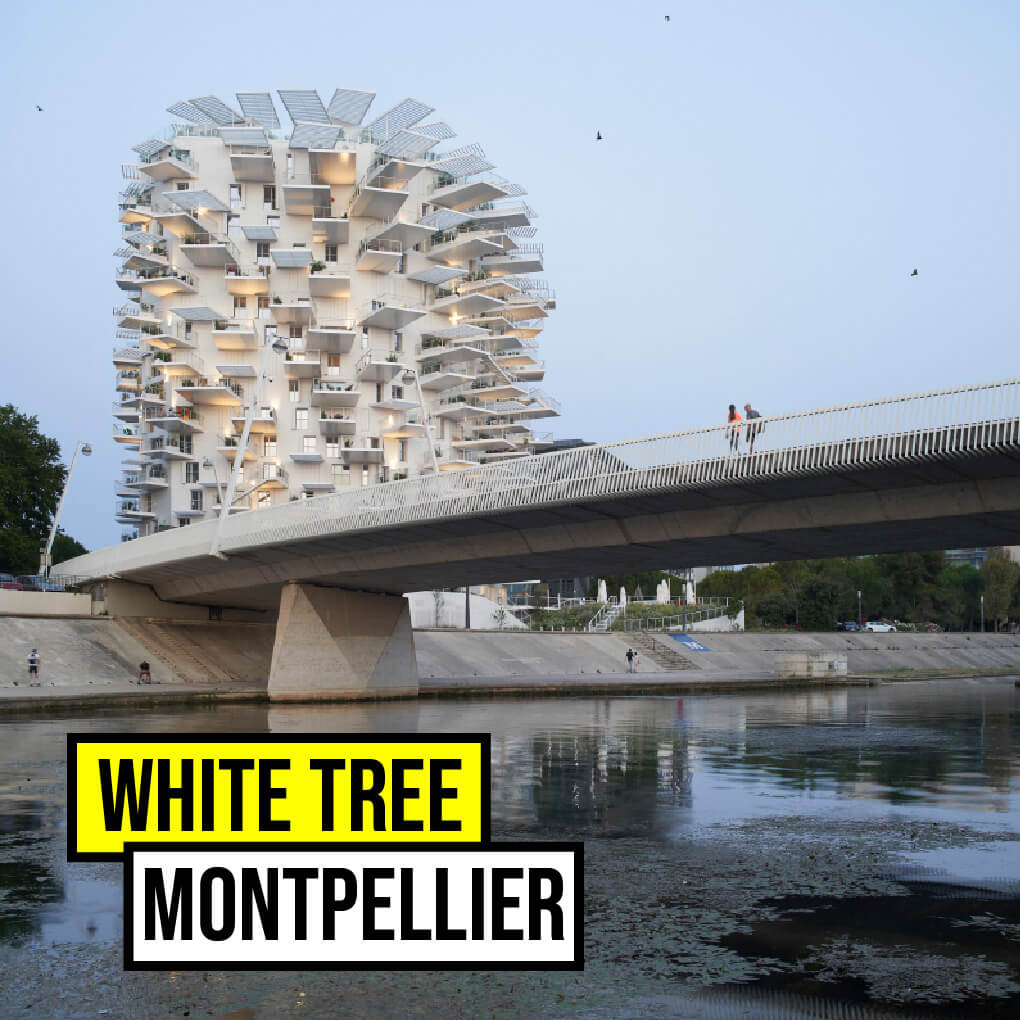 White Tree Montpellier