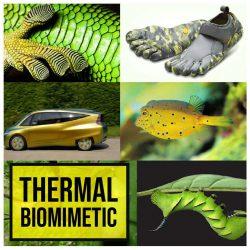 Thermal-Biomimetic-01